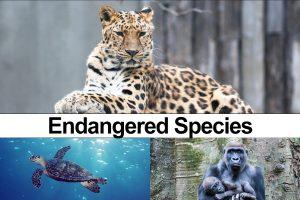 Endangered Species Day 2020: 43 Animals At Risk Of Extinction